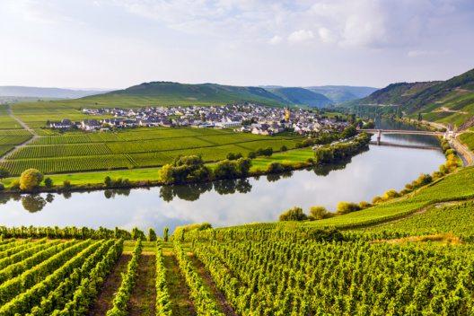 Mosel-Weinanbaugebiet in Trittenheim, Deutschland (Bild: © Jorg Hackemann)