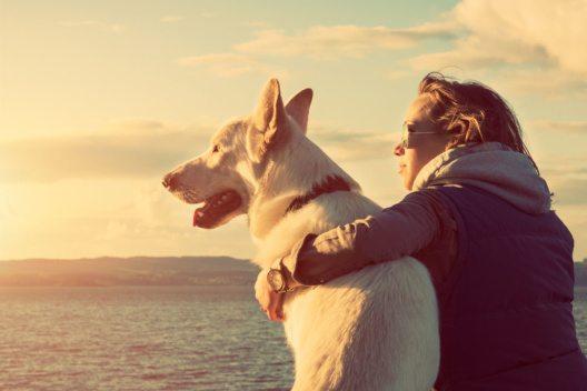 Die Niederlande öffnen ihre Strände auch für Hunde. (Bild: Andrea Obzerova – Shutterstock.com)
