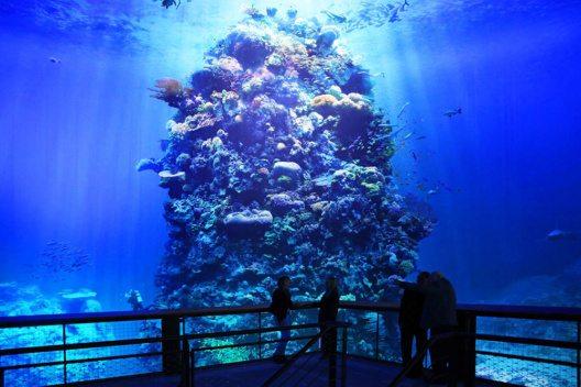Noch bis zum 15. Januar 2017 haben Besucher die Möglichkeit, in die einzigartige Unterwasserwelt des Great Barrier Reefs im Panometer Leipzig einzutauchen. (Bild: © Andreas Schmidt)