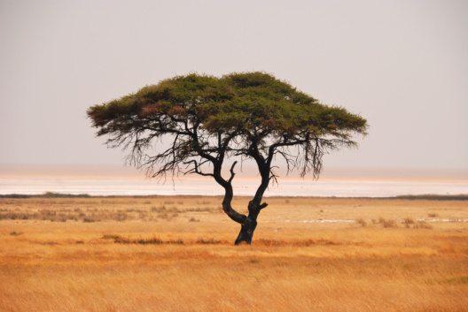 Namibia (Bild: © Hans-Jürgen Spengemann - pixelio.de)
