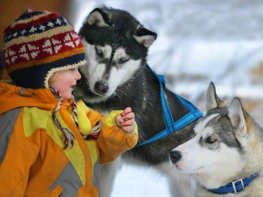 Huskyranch in Angerberg (Bild: Martin Eigentler)