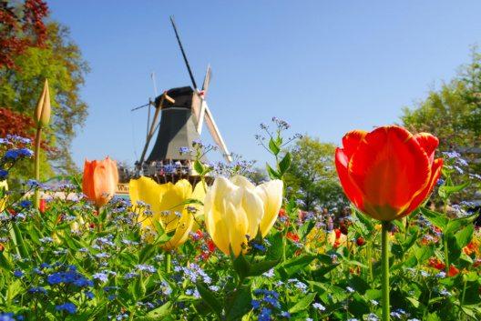 Niederländische Nüchternheit und Innovationsstärke (Bild: © Regien Paassen - shutterstock.com)