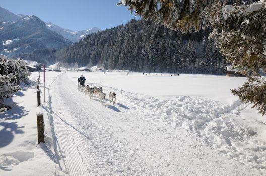 Hunderennen (Bild: © Marianne Tschanz-Rieder / Lenk-Simmental Tourismus AG)