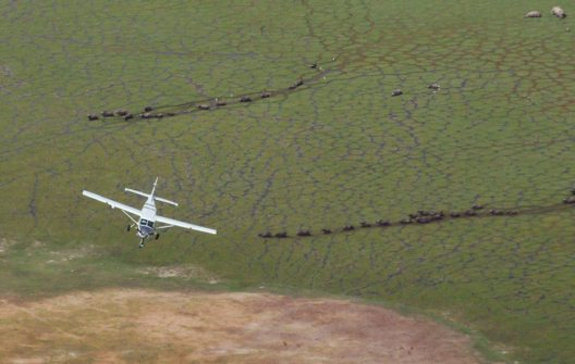 Flying Safari in Afrika (Bild: Travelhouse)