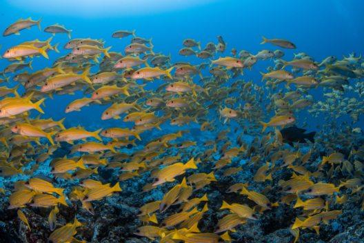 Unterwasserwelt (© Sascha Janson - shutterstock.com)