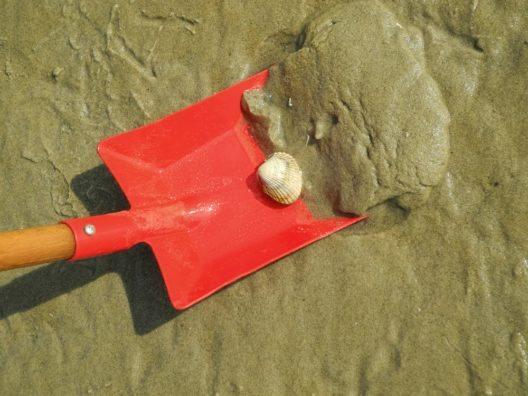 Planschen und buddeln mit Radweg-Reisen - Sollte das Wasser zu kalt zum Planschen sein, ist ein Picknick im Strandkorb oder die Suche nach Muscheln zu jeder Jahreszeit möglich.
