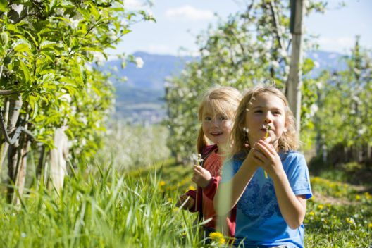Auf einem gemeinsamen Spaziergang durch die Apfelblüte in Missian bei Eppan gibt es für Kinder viel zu entdecken. (Bild: © Südtirol Marketing / Alex Filz)