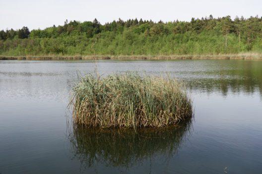 Barchetsee