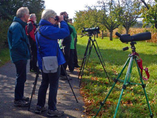 Der EuroBirdwatch lädt am 30. September und 1. Oktober 2017 zum Beobachten, Zählen und Staunen ein. (Bild: © BirdLife Schweiz)