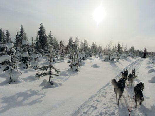 Den Jahreswechsel in Finnisch Lappland erleben (Bild: © ASI Reisen)