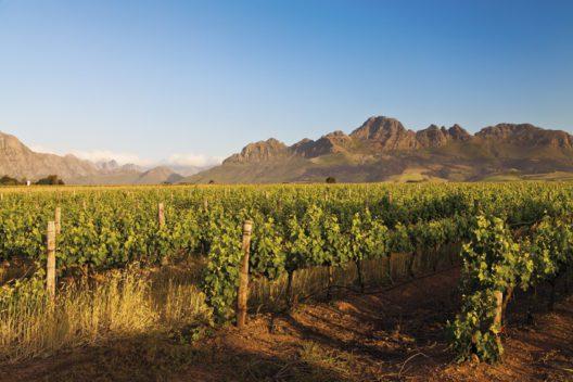 Weine entdecken in Afrika (Bild: Stellenbosch - shutterstock)
