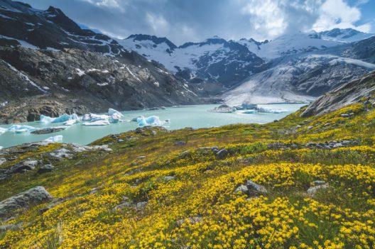 Die Zunge des Gauligletschers endet derzeit auf 2150 m und kalbt in zwei Seen. Aus diesen Seen fliesst durch das Urbachtal das Uerbachwasser ab, das bei Innertkirchen in die Aare muendet. (Bild: Schweiz Tourismus / Martin Maegli)