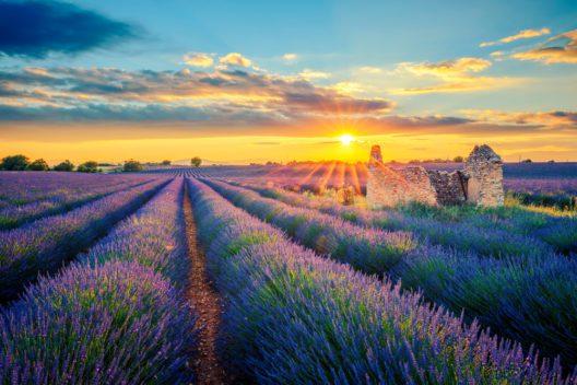 Lavendelfelder in der Provence (Bild: prochasson frederic - shutterstock.com)