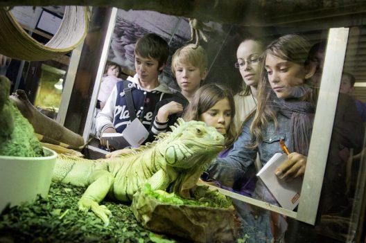 Leguan zeigt sich den Besuchern (© Michel Ansermet)
