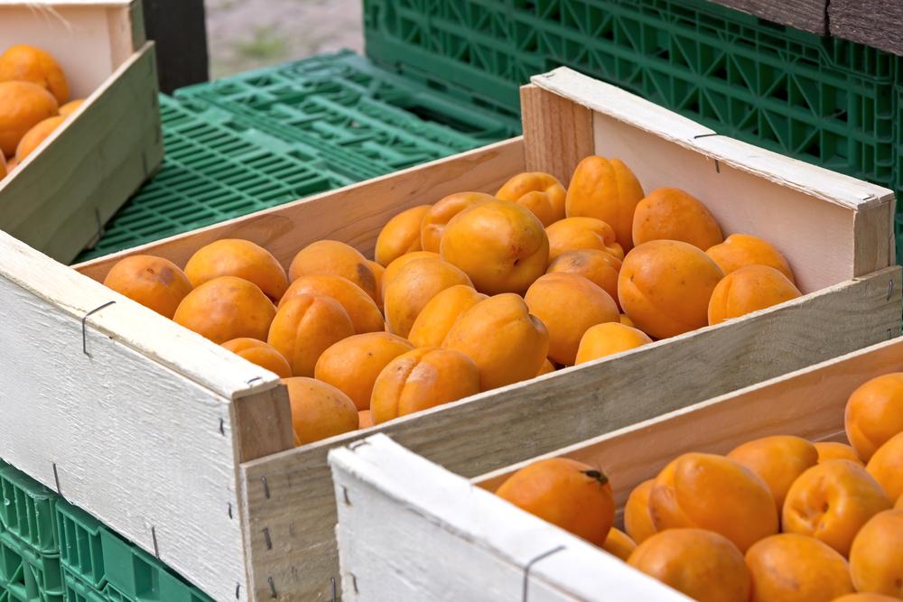Biologische und frische Aprikosen auf dem Wochenmarkt. Wurde im Wallis, Schweiz, gesehen,