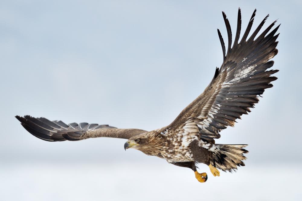 312 verschiedene Vogelarten leben im Europareservat Unterer Inn. (Bild: AndreAnita - shutterstock.com)
